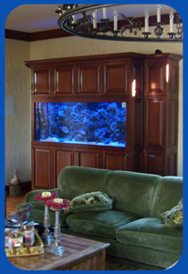 Custom Salt Water Fish Tank Install by Salt Water Island