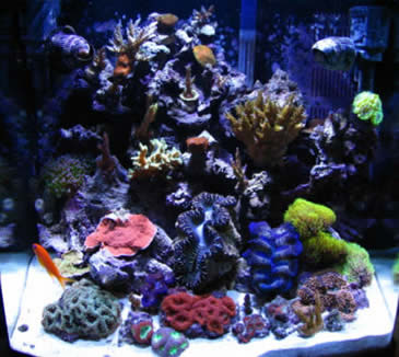 Salt water island nano eco systems for Nano saltwater fish