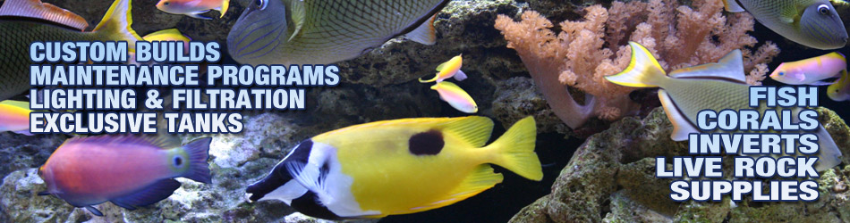 Saltwater Aquarium Specialists, everything you need for your